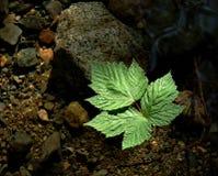 pływający liści, Zdjęcie Royalty Free