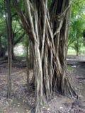 Pływakowy korzeń w ogródzie Szerokość widok obraz stock