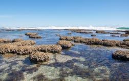 Pływowi baseny: Błękitne dziury, zachodnia australia Obraz Stock