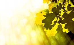 αφηρημένη ανασκόπηση φθινο&p Στοκ φωτογραφία με δικαίωμα ελεύθερης χρήσης