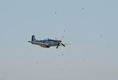 P-51 Mustang surrounded by birds Stock Image
