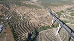 1080p antenn, flyg över fruktträdgårdar för en huvudvägbro och ner flodby- och oliv, Andalucia, Spanien Staright rader av olivgrö arkivfilmer