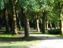 Płascy drzewa i topola w parku Zdjęcia Royalty Free