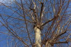 Płaski drzewo Obraz Stock