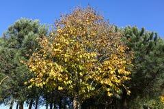 Płaski drzewo Obrazy Stock