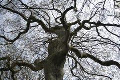 płaski London drzewo Zdjęcia Royalty Free