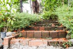 Płatki na schodkach w ogródzie Obraz Royalty Free