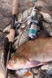 P?che de troph?e Vue haute ?troite de grands poissons communs d'eau douce de br?me et de canne ? p?che avec la bobine sur l'?puis photographie stock