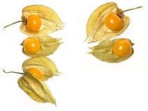Pęcherzycy pęcherzycy owocowy peruviana Obrazy Stock