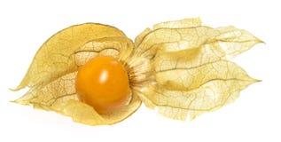 Pęcherzycy pęcherzycy owocowy peruviana Obraz Royalty Free