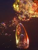 pęcherzyk powietrza Zdjęcia Royalty Free