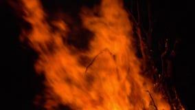 p?on?cy ogie? ognisko Zbli?enie p?omienie Pali na Czarnym tle, zwolnione tempo zbiory