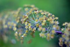 Pączków kwiaty Obrazy Stock