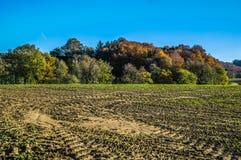 Pędrak w jesieni Fotografia Royalty Free