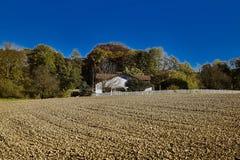 Pędrak w jesieni Zdjęcie Royalty Free