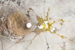 P?jaro roto, de los huevos est? bajando de jerarqu?a con la c?scara de huevo y la yema de huevo del p?jaro de los huevos en la ti fotos de archivo
