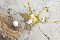 P?jaro roto, de los huevos est? bajando de jerarqu?a con la c?scara de huevo y la yema de huevo del p?jaro de los huevos en la ti fotografía de archivo libre de regalías