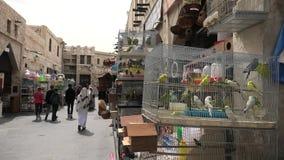 P?jaro Souq Doha almacen de metraje de vídeo