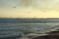 P?jaros en el mar foto de archivo