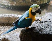P?jaros hermosos del Macaw y del loro del primer en los parques p?blicos imagenes de archivo