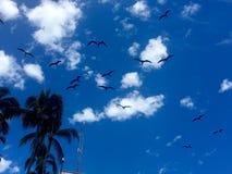 P?jaros que vuelan en cielo foto de archivo libre de regalías