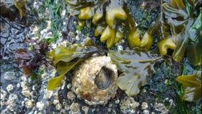 Pąkle w morzu Zdjęcia Stock