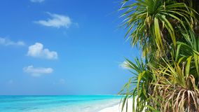 P00631 Maldives beautiful white sandy beach background with palm trees on sunny tropical paradise island with aqua blue sky sea wa. Maldives beautiful white Stock Photography