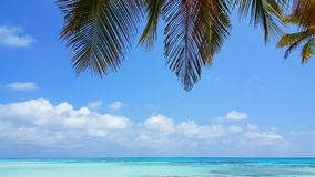 P00664 Maldives beautiful white sandy beach background with palm trees on sunny tropical paradise island with aqua blue Royalty Free Stock Images
