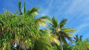 P00773 Maldives white sandy beach coconut palm trees on sunny tropical paradise island with aqua blue sky sea ocean 4k Stock Images