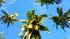 P00764 Maldives white sandy beach coconut palm trees on sunny tropical paradise island with aqua blue sky sea ocean 4k Stock Photography