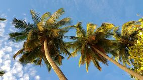 P00776 Maldives white sandy beach coconut palm trees on sunny tropical paradise island with aqua blue sky sea ocean 4k. Maldives white sandy beach coconut palm Stock Photography