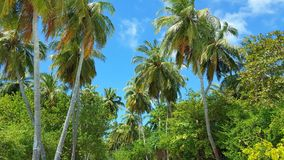 P00757 Maldives white sandy beach coconut palm trees on sunny tropical paradise island with aqua blue sky sea ocean 4k. Maldives white sandy beach coconut palm Stock Photos