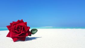 P00828 Maldives white sandy beach red rose flower on sunny tropical paradise island with aqua blue sky sea ocean 4k. Maldives white sandy beach red rose flower stock photos