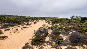 P. A narrow sand path along the ocean in Portugal Stock Photo