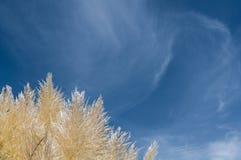 Płocha przeciw niebieskiemu niebu Fotografia Royalty Free