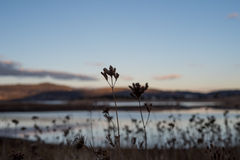 Płochy i halny jezioro krajobraz Zdjęcia Royalty Free