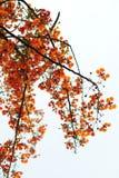 płomienia drzewo Zdjęcia Royalty Free