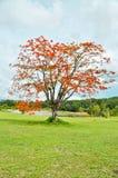 Płomienia drzewo Zdjęcie Royalty Free