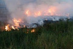 Płomienie na trawa kopu Obrazy Stock