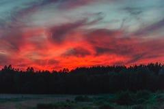 Płomienny zmierzch nad lasem Obrazy Royalty Free