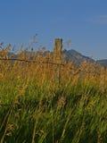 płotowe trawy Obrazy Royalty Free
