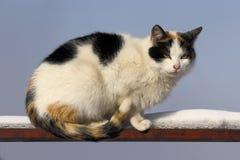 płotowy kota piebald Obraz Stock