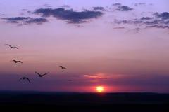Pôr-do-sol Foto de Stock Royalty Free