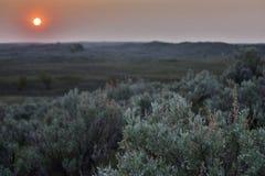 Pôr do sol sobre a artemísia Imagem de Stock Royalty Free