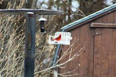 P?ssaro cardinal vermelho brilhante na neve em um alimentador do p?ssaro foto de stock royalty free