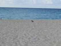 P?ssaro na praia fotografia de stock