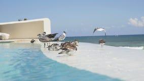 P?ssaros que nadam na associa??o associação infinita contra o contexto do mar das caraíbas 4K vídeos de arquivo