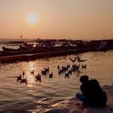 p?ssaros que voam sobre o rio no por do sol imagem de stock