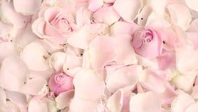 P?talos de la flor de Rose en el fondo de m?rmol metrajes