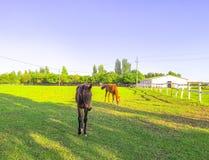 P?turages verts des fermes de cheval image stock